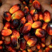 «L'huile de palme n'est pas un poison»