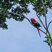 Équateur : une forêt tropicale très préservée