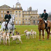 Angleterre : la chasse au renard contestée