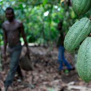 Le cacao au cœur du malaise ivoirien
