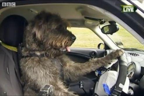 en nouvelle z lande des chiens apprennent conduire. Black Bedroom Furniture Sets. Home Design Ideas