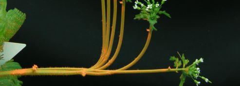 Comment les plantes restent-elles debout?