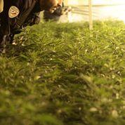 Drogue: 2 milliards d'euros de CA en France