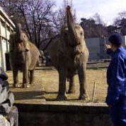 Les éléphantes de la Tête d'Or sauvées
