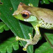 Biodiversité: le Mékong dévoile ses secrets