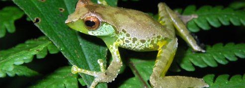 Biodiversité: le bassin du Mékong dévoile ses secrets