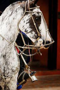 C'est avec impatience que chacun attend la Semaine de la tradition, au mois de novembre, où les gauchos défilent dans leurs vêtements d'apparat montés sur leurs chevaux couverts d'ornements en argent.