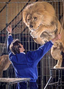 Dans R oselyne et les lions , Thierry répète avec Voltan, un redoutable félin qui faillit lui coûter la vie.