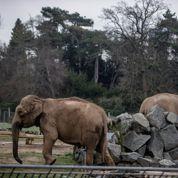 Deux éléphantes et une affaire d'État