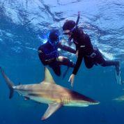 «En Afrique du Sud, j'ai plongé avec les requins»