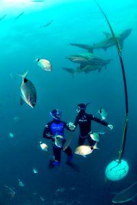 Le parcours sportif de Pierre Frolla rassure ceux qui suivent ses stages, autant que son expérience avec les requins, dont il défend la cause.