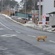 Fukushima, la décontamination bâclée