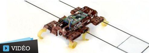 Un robot-cafard bat des records de vitesse