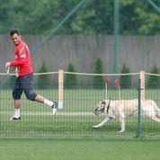 Nestlé lance un aliment pour les chiens sportifs
