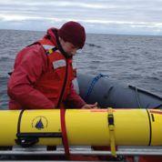 Des baleines suivies en temps réel