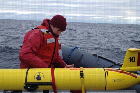 Des baleines suivies en temps réel dans les océans