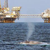 Le bruit fait des ravages sur les espèces marines