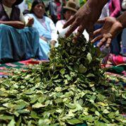 L'ONU dépénalise la coca en Bolivie