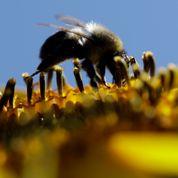 Trois insecticides sur la sellette