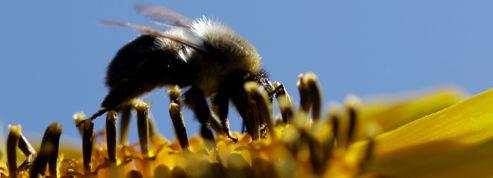 Trois insecticides pourraient être interdits en Europe