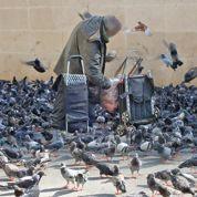 À Paris, Beaubourg envahi par les pigeons