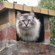 L'odyssée de Tigrou, le chat qui aimait le foot