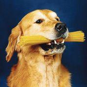 Le chien serait un loup amateur de féculents