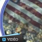Pyongyang attaque New York dans un clip