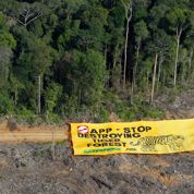 Déforestation : le 3e papetier s'engage