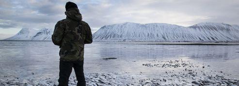 Islande : des millions de harengs retrouvés morts