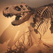 Les dinosaures ont été victimes de météorites
