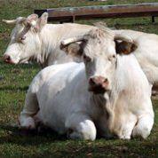 Affaire Findus : panique dans l'agroalimentaire