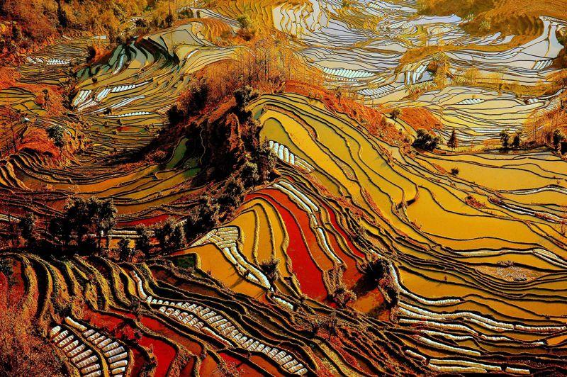 <b>Rizière de diamant</b>. Creusées il y a plus d'un millénaire par les paysans du peuple Hani, ces rizières en terrasses s'étendent à perte de vue au sommet des montagnes duYunnan, au sud ouest de la Chine. Génération après génération, ils ont inlassablement modelé la montagne pour agrandir leurs champs, utilisant le moindre centimètre carré disponible. Certaines terrasses ont ainsi été creusées sur des pentes à plus de 75%. Une prouesse technique unique au monde. Chaque année,du mois d'avril au mois de septembre, lesHanis y cultivent toujours le riz.Après chaque récolte, les bassins sont inondés pour préparer la culture suivante.Rituel immuable, l'inondation des rizières attire desmilliers de touristes venus dumonde entier.
