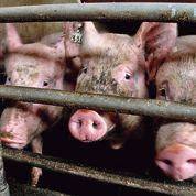 Cartel du porc : cinq abatteurs condamnés