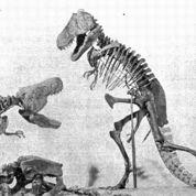 Les vieux problèmes de posture du T. rex