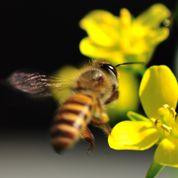 De l'électricité entre les fleurs et les abeilles