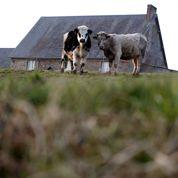 L'agriculture pénalisée par sa compétitivité