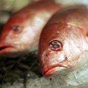 Après la viande chevaline, le poisson