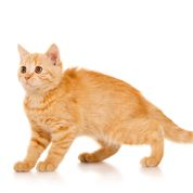Syndrome du chat bouché : gare au stress