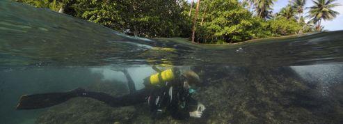 Biodiversité: l'expédition en Papouasie est de retour