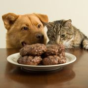 Quelle alimentation pour votre animal ?