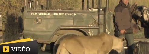 Face à un lion, un caméraman a la peur de sa vie