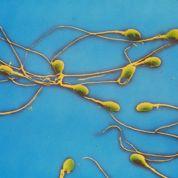 Des cellules souches pour guérir la stérilité?