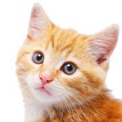Arthrose : une affection discrète chez le chat