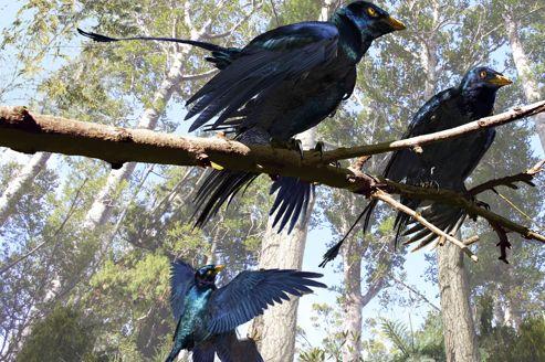 Des oiseaux primitifs auraient eu deux paires d'ailes