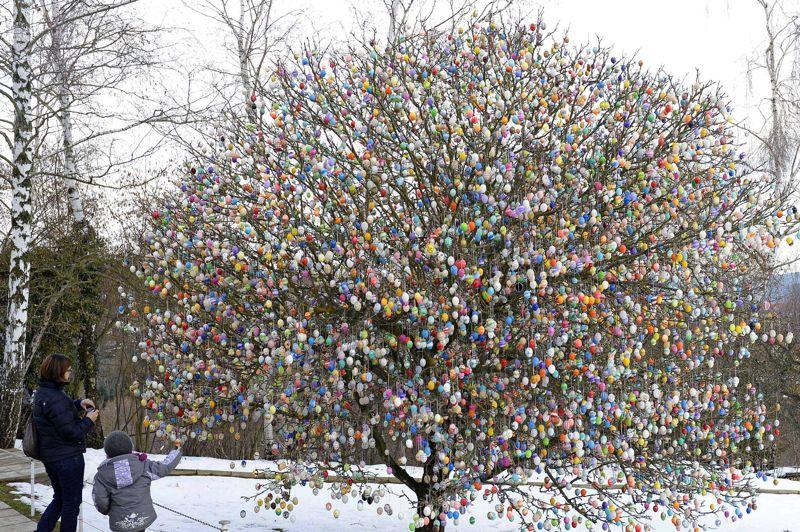 <strong>Œufs cube.</strong> Depuis 40 ans, un couple installé à Saalfeld en Allemagne décore un arbre d'œufs peints à la main à l'occasion de Pâques. La première année, l'arbre n'avait que 18 œufs, mais ils se sont surpassés chaque fois en fabriquant quelques œufs de plus. Ce printemps, ce sont dix mille œufs de Pâques qui ornent l'arbre. Mais le couple a promis qu'il n'en fera pas plus l'an prochain! Plus de deux semaines ont été nécessaire pour installer tous ces oeufs qui font la joie des touristes venus de toute l'Allemagne.