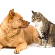 Chien et chat : gérer les crises d'épilepsie