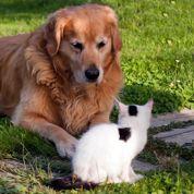 Chiens et chats : nettoyage de printemps