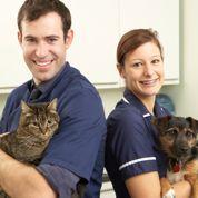 Chien et chat : attention aux chenilles