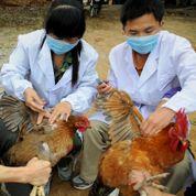 Grippe H7N9 : la Chine prend des mesures